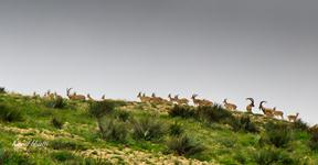 Kirthar National Park.